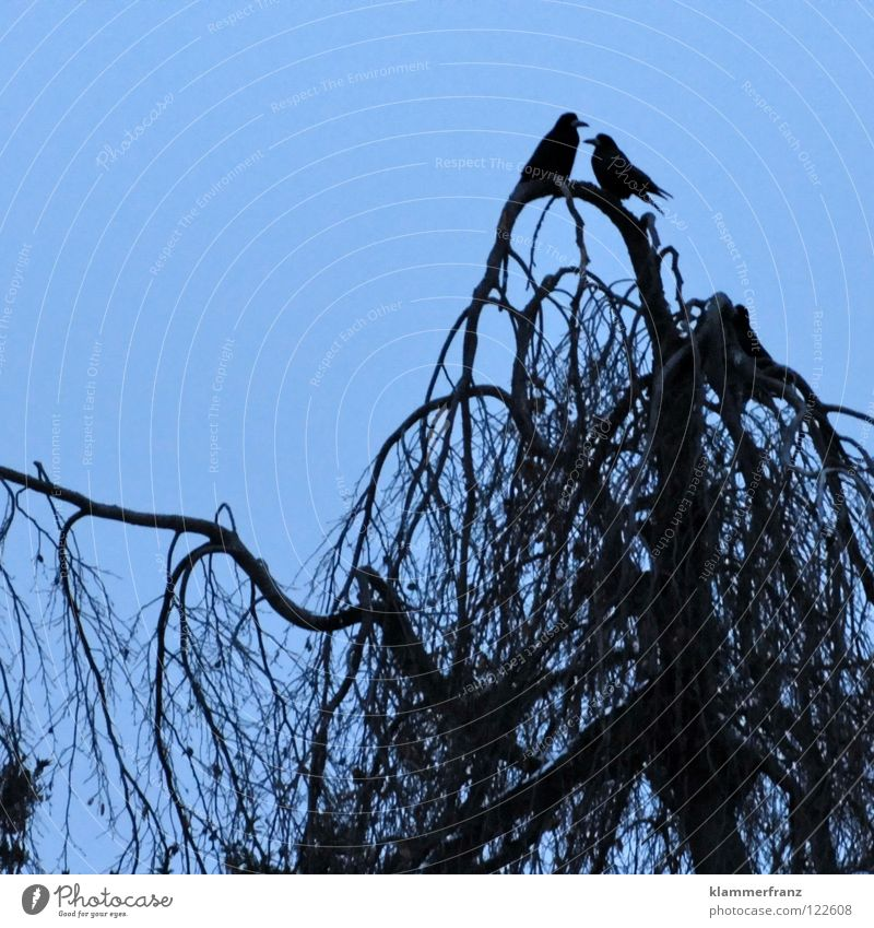 Die Liebe Rabenvögel Treue Zusammensein Feder Krallen Geborgenheit Wunsch Nachkommen Baum Wald Blatt Laubbaum Krähe Winter kalt gefroren erfrieren Park Gemälde