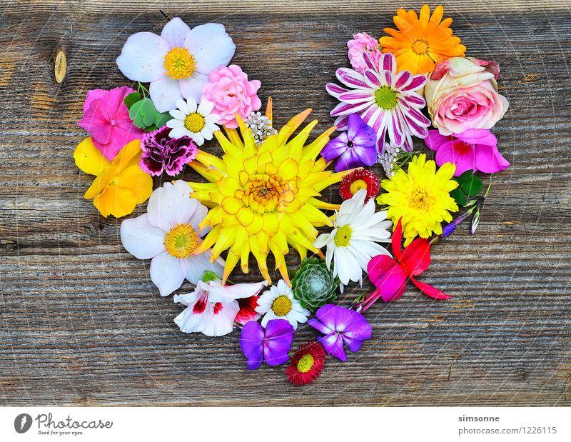 Blütenherz auf Holz Glück Sommer Garten Valentinstag Muttertag Hochzeit Blume Rose Schmuck Herz alt Liebe gelb rosa Romantik Rahmen Holzhintergrund Blumenherz