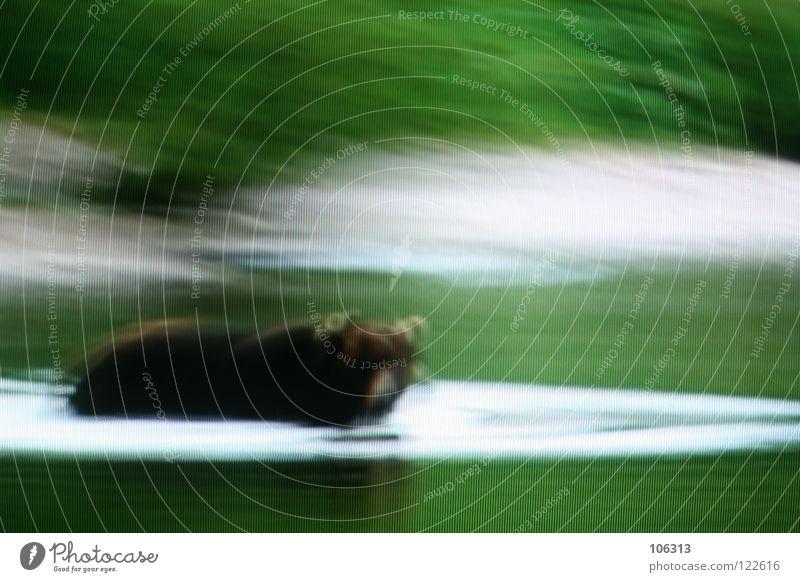 BÄRBEL Natur blau Wasser grün rot Wiese Gras See Kunst Wildtier außergewöhnlich Ausflug gefährlich Suche bedrohlich fahren