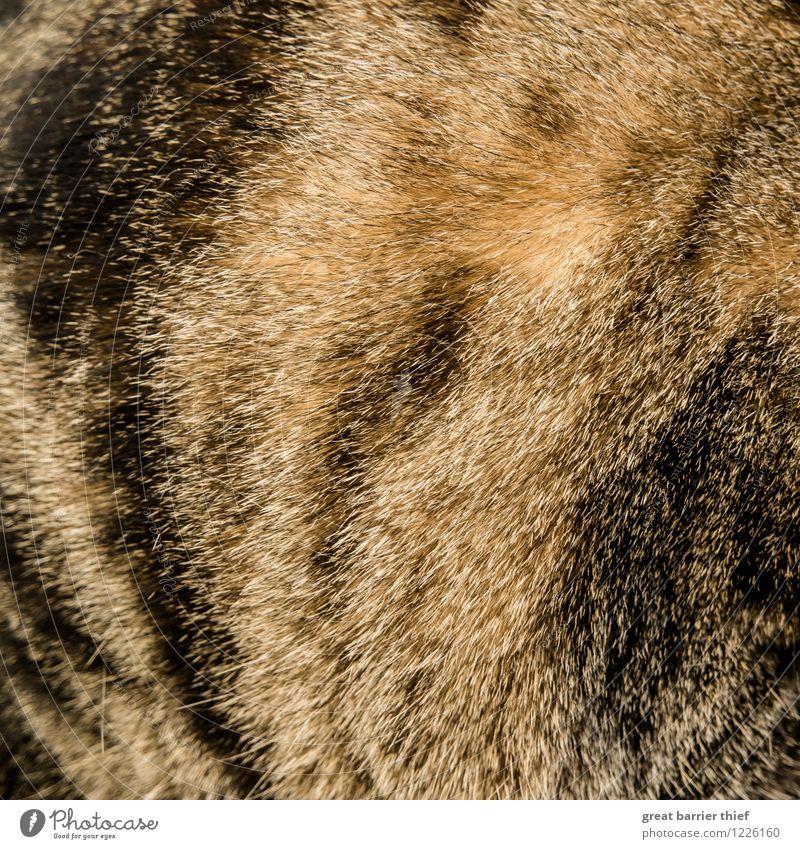 Fellmuster Tier Haustier Katze 1 braun mehrfarbig gelb gold schwarz Farbfoto Innenaufnahme Nahaufnahme Detailaufnahme Experiment Muster Strukturen & Formen