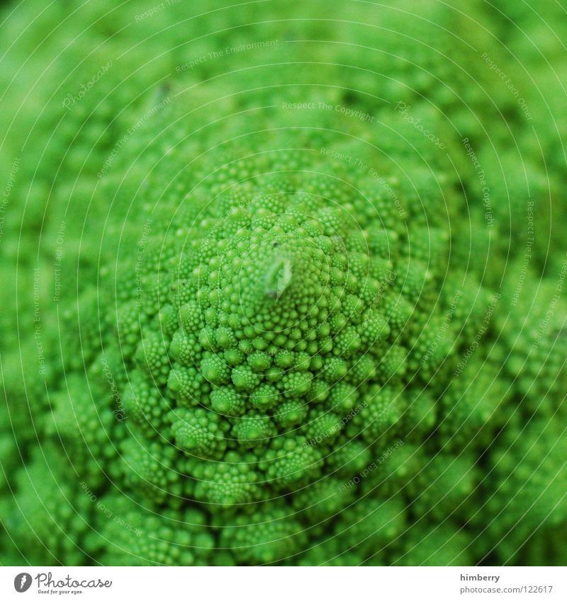 romanescocase Ernährung Kohl Lebensmittel Vegetarische Ernährung Vitamin Pflanze Gesundheit grün Makroaufnahme Nahaufnahme Gemüse Romanesco Spargelkohl