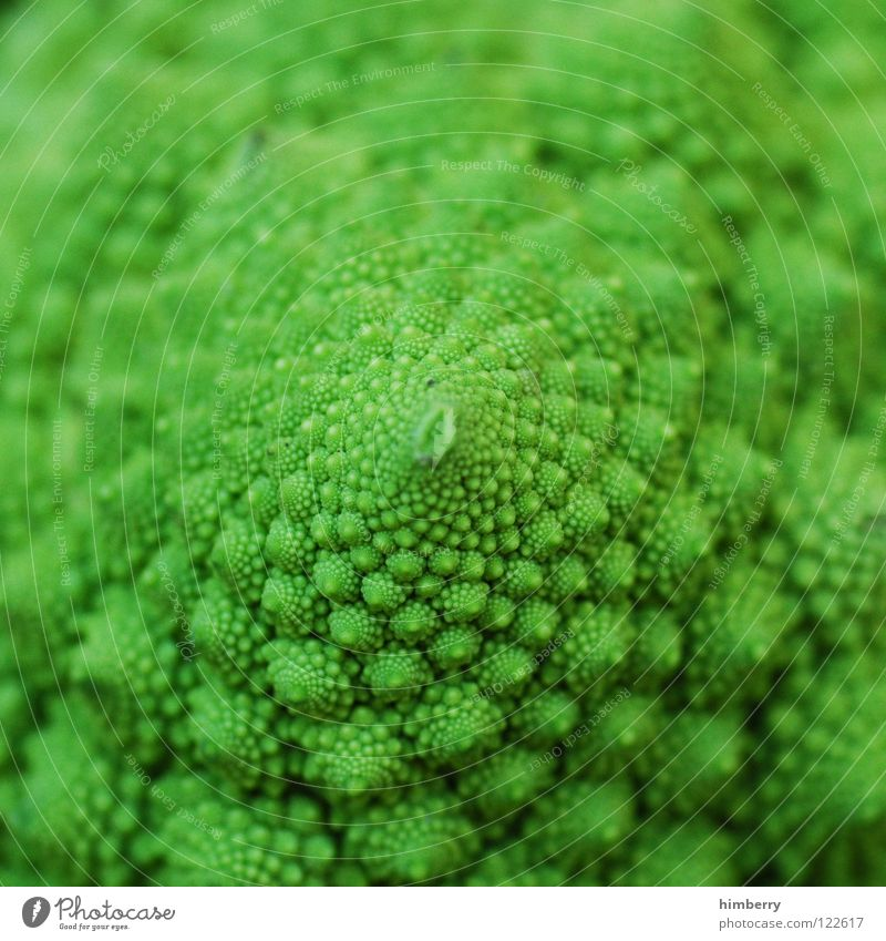 romanescocase grün Pflanze Ernährung Gesundheit Lebensmittel Gemüse Vitamin Oberfläche pflanzlich biologisch Vegetarische Ernährung Kohl Gesunde Ernährung