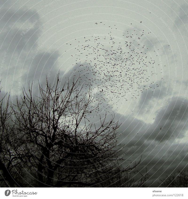 ::REISENDE:: Natur Ferien & Urlaub & Reisen Baum Pflanze Einsamkeit Tier Wolken Winter ruhig Wald Ferne dunkel kalt Herbst Wege & Pfade Freiheit