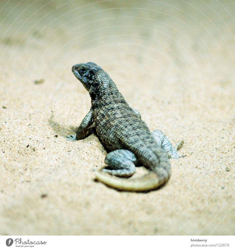 roger whitaker Tier Zoo exotisch Tarnung Echsen gepanzert Echte Eidechsen Leguane Molch