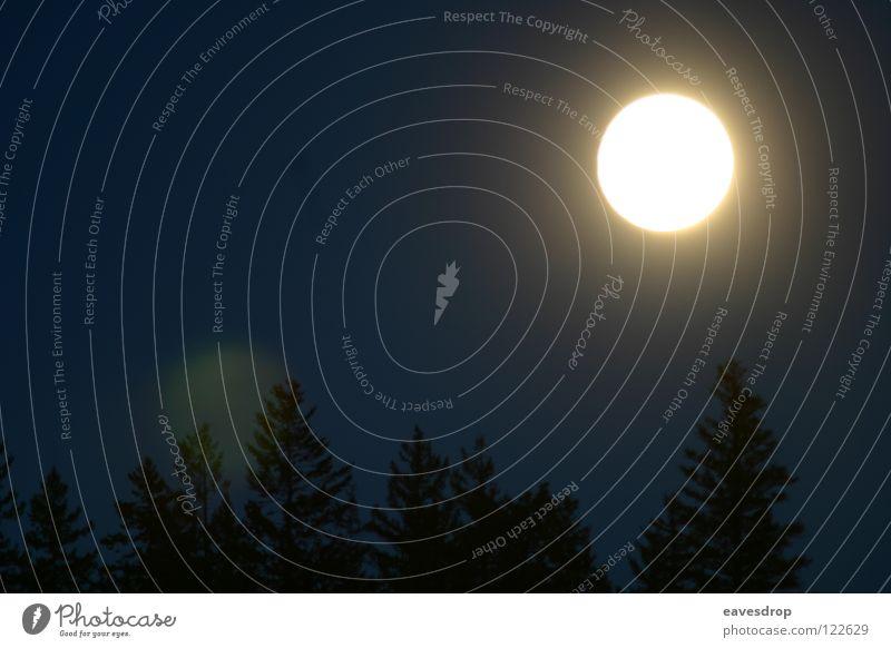 coast mountains moon light1 Gegenlicht Vollmond Wald Baum Nacht Wetter Mond Natur Landschaft