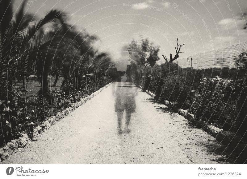 ghost Mensch maskulin Mann Erwachsene Leben Rücken 1 30-45 Jahre Natur Landschaft Pflanze Wege & Pfade Sand laufen außergewöhnlich fantastisch gruselig Gefühle
