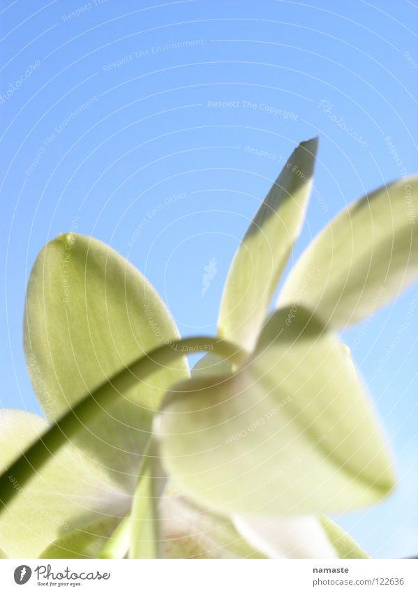 ein hauch frühling1 Natur Himmel grün blau Pflanze Freude Leben Frühling Wachstum positiv Trieb entstehen Reifezeit hellgrün