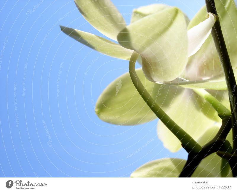 ein hauch frühling 2 Frühling Pflanze grün hellgrün Reifezeit Wachstum entstehen positiv blau Trieb Freude Leben Himmel Natur
