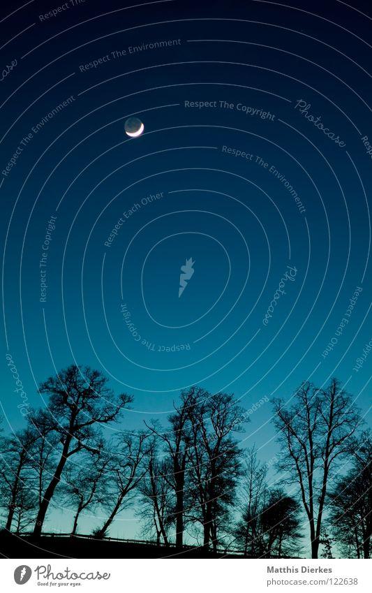 Mond Abend Nacht Wald Baum Verlauf Halbmond Himmel Beleuchtung Götter Glaube geheimnisvoll mystisch Geäst kalt Wolf Werwolf Romantik Angst unheimlich gruselig