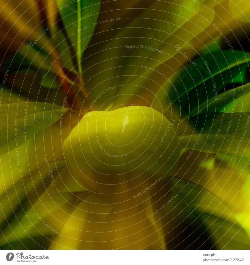 Blätter Schwache Tiefenschärfe Unschärfe abstrakt Hintergrundbild Ast Zweig verästelt verzweigt Pflanze Sträucher Baum Stengel grün Natur Oval