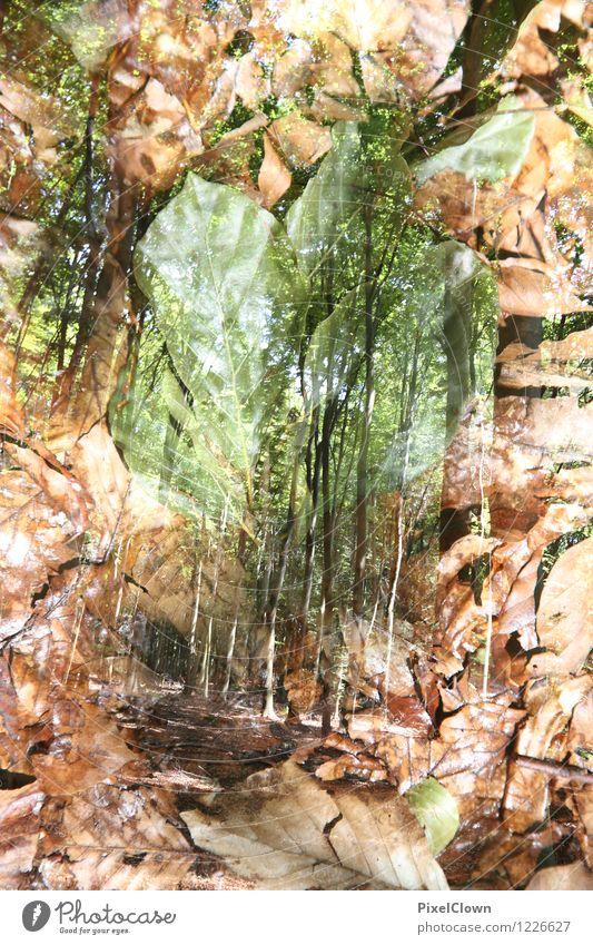 Laubwald Natur Ferien & Urlaub & Reisen Pflanze grün Baum Landschaft Blatt Wald Stil außergewöhnlich braun Stimmung Kunst Park träumen Design