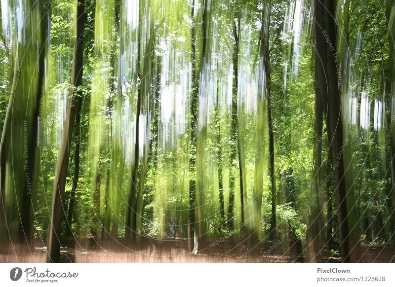 Wald Natur Ferien & Urlaub & Reisen Pflanze schön grün Baum Landschaft Tier Umwelt Leben Stil außergewöhnlich Stimmung Park Design