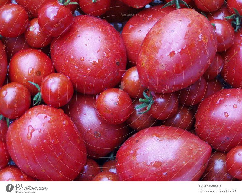 frisch gepflückt rot Gemüse Tomate