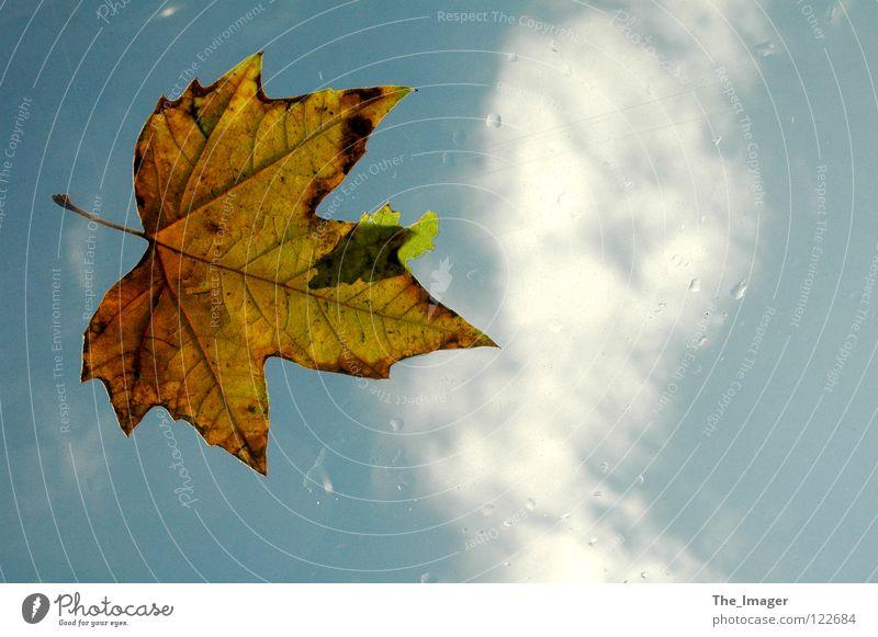 Herbst Natur Wasser Himmel Blatt Wolken kalt Regen Wetter Wassertropfen Jahreszeiten Kanada Unwetter Ahorn