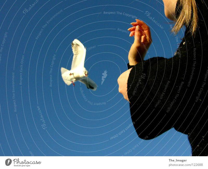Möwenflug Frau Ferien & Urlaub & Reisen Hand Meer Freude Strand Erholung feminin Küste Vogel Finger Flügel Ostsee Möwe Schnabel füttern