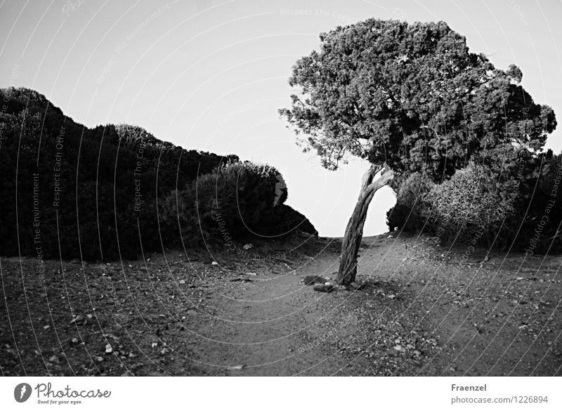 Pfade Umwelt Natur Landschaft Pflanze Erde Sand Himmel Sonnenlicht Sommer Baum Sträucher Hügel Menschenleer Gelassenheit ruhig Fernweh Wege & Pfade