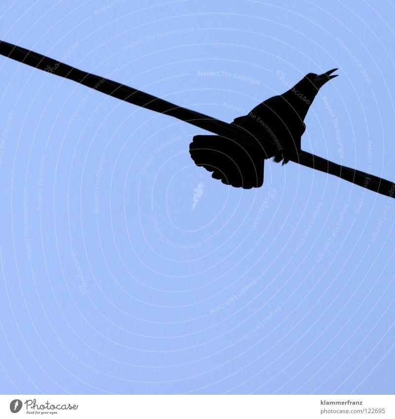 Pressing Himmel Winter schwarz kalt grau Vogel Elektrizität Kabel Feder schreien Konzentration gefroren anstrengen Schnabel Leitung singen