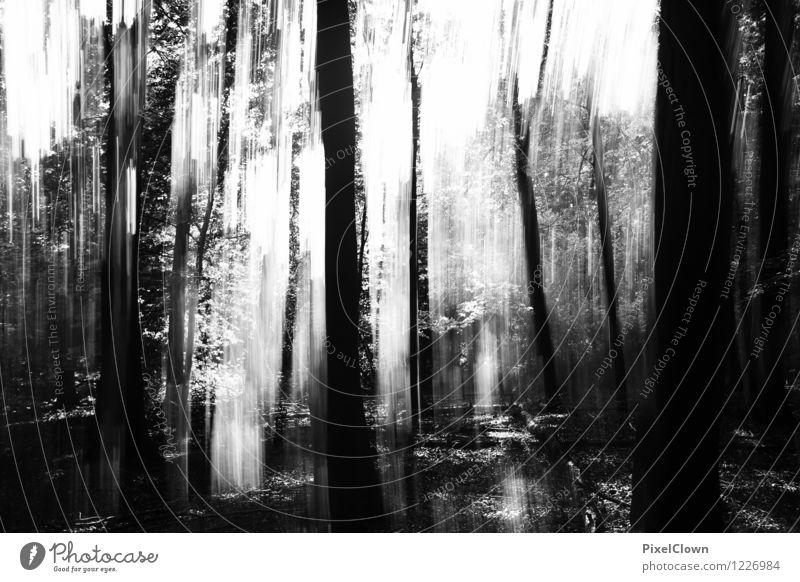 Black forest Natur Ferien & Urlaub & Reisen Pflanze weiß Baum Landschaft Blatt Tier dunkel Wald schwarz Gefühle Stil Holz Kunst Park
