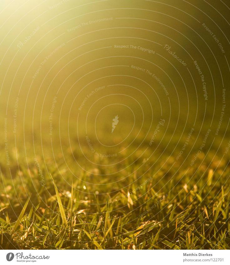 Wiese Natur schön grün Farbe Sonne rot Winter dunkel kalt gelb Wärme Leben Frühling Wiese Gras hell