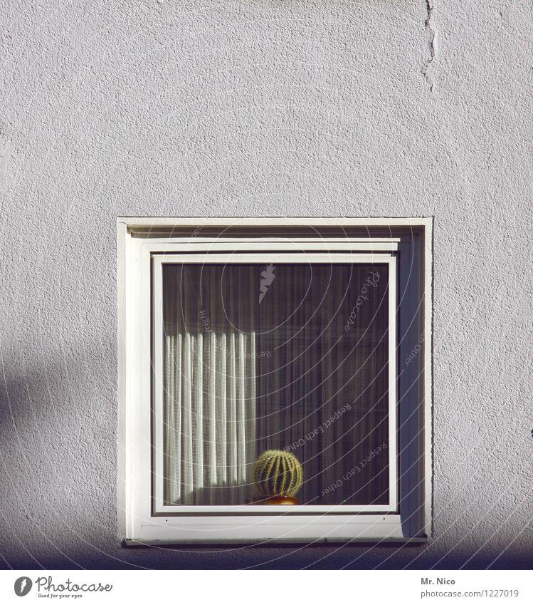 kacktusse Freizeit & Hobby Häusliches Leben Wohnung Haus Dekoration & Verzierung Gebäude Fassade Fenster grau Gardine Kaktus Kakteenstacheln Glasscheibe weiß