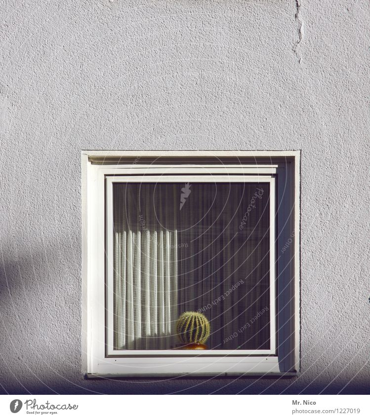 Fassade frontal textur  kacktusse Pflanze weiß - ein lizenzfreies Stock Foto von Photocase