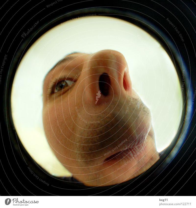 NASEnbär pt.1|3 Lippen Nasenloch Augenbraue schwarz Wachsamkeit braun Sinnesorgane Fischauge Makroaufnahme Nahaufnahme Ohr Mund Gesicht Kopf Blick