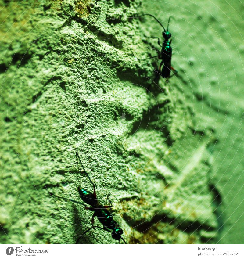 upsidedown Tier Wand laufen Klettern Insekt Zoo Ameise Plage Schädlinge Ameisenhügel