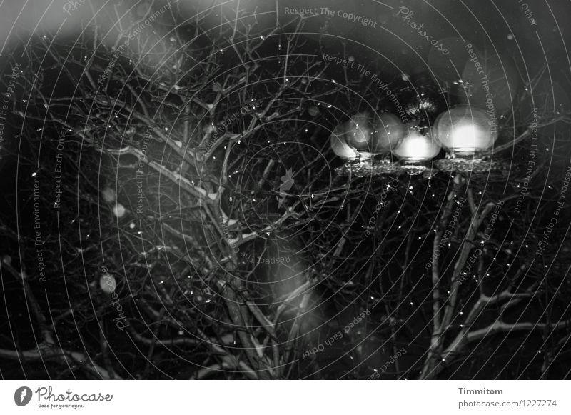 Mehr Licht. Häusliches Leben Natur Himmel Winter Fliederbusch Garten leuchten dunkel grau schwarz weiß Gefühle Stimmung Deckenlampe Fenster Lichterkette