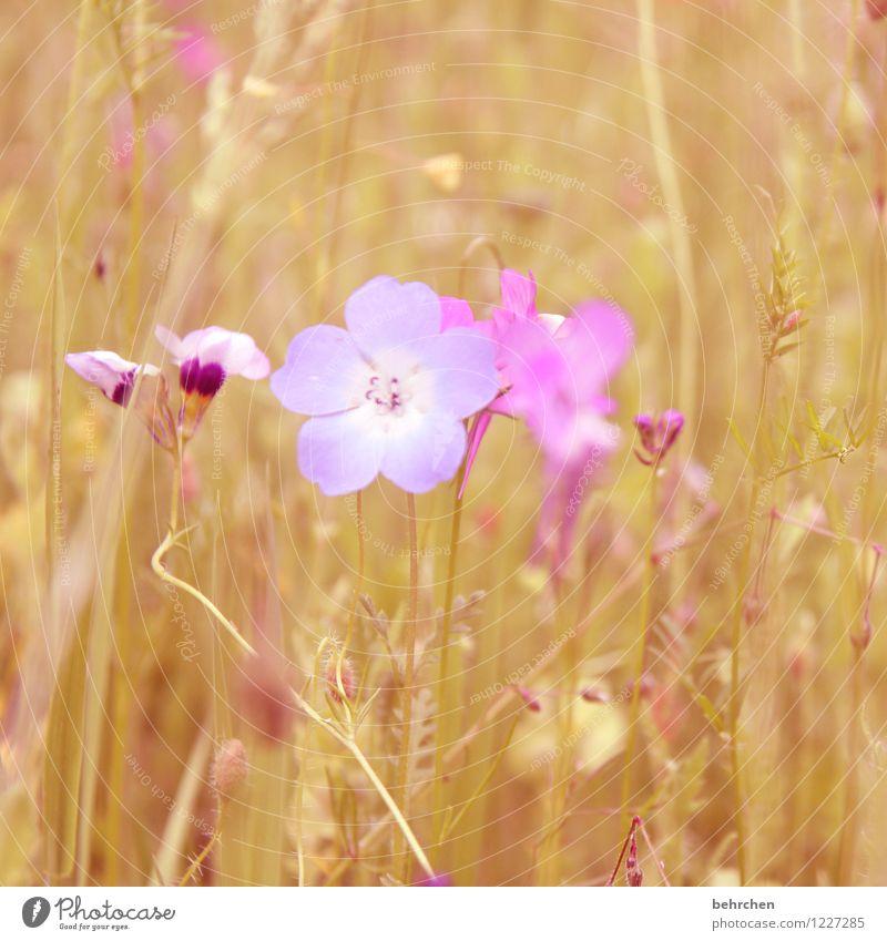besonders sein Natur Pflanze Frühling Sommer Schönes Wetter Blume Gras Blatt Blüte Wildpflanze Garten Park Wiese Blühend Duft verblüht Wachstum schön klein