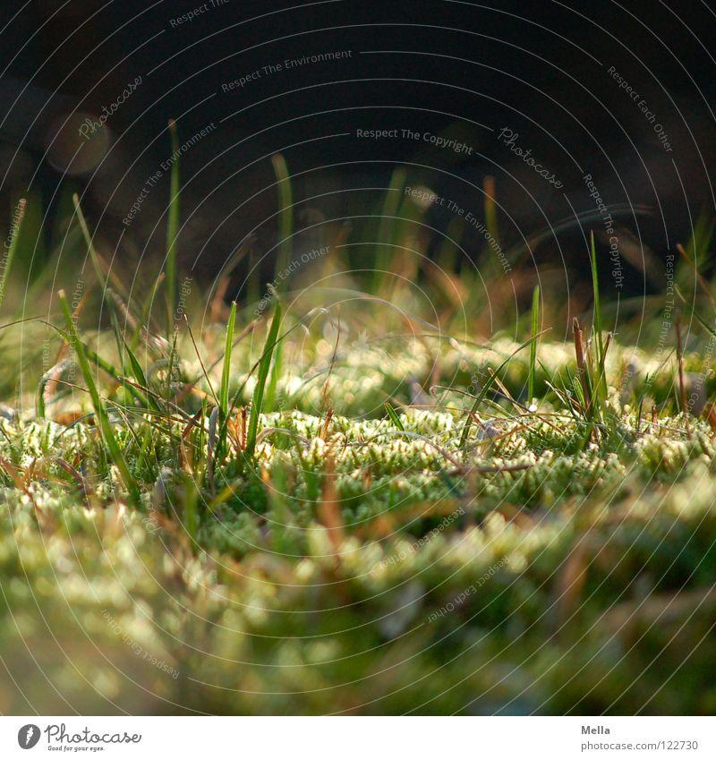 Käferperspektive grün Wiese Gras Park Beleuchtung klein geschlossen Perspektive nah weich unten tief Schönes Wetter Märchen Käfer Zauberei u. Magie