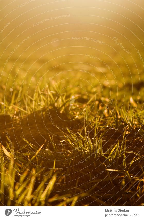 Wiese Abend Sonnenuntergang Gras Romantik kalt Gegenlicht unberührt Zaun dunkel Erkenntnis gelb grün zyan rot purpur rosa Kitsch Dämmerung Ozon Klimawandel