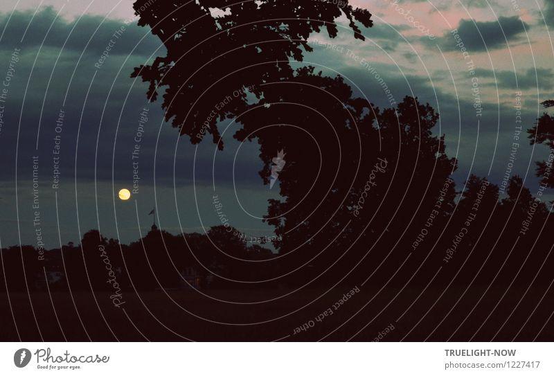 Mondtag Landschaft Himmel Wolken Nachthimmel Baum Park Blick ästhetisch dunkel glänzend groß schön blau grau rosa schwarz weiß Gefühle Stimmung Verschwiegenheit