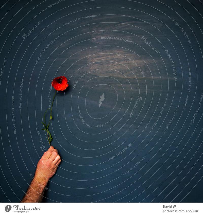 in love Mensch maskulin feminin Frau Erwachsene Mann Partner Jugendliche Leben Kunst Künstler berühren Geschenk Blume Mohnblüte rot Liebe Romantik Valentinstag