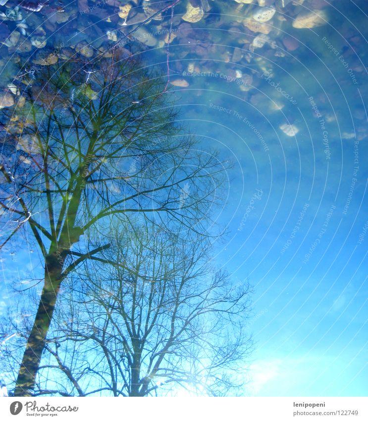 Umkippen Wasser Himmel Baum Sonne Winter Blatt Lampe kalt Herbst Stein See hell nass Teich Baumkrone verbinden