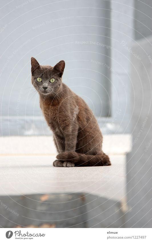 gespannt wie ein Flitzebogen Katze schön Tier schwarz braun glänzend elegant sitzen Kommunizieren beobachten niedlich Pause Neugier Todesangst Risiko Kontakt