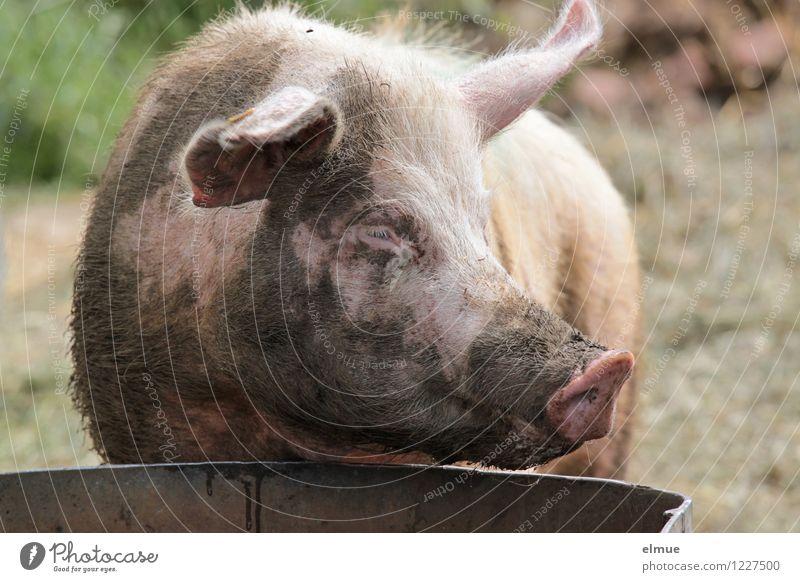 Einmal waschen und legen bitte! schön Erholung Tier Glück rosa Zufriedenheit dreckig genießen Lebensfreude beobachten einzigartig Neugier trinken Gelassenheit