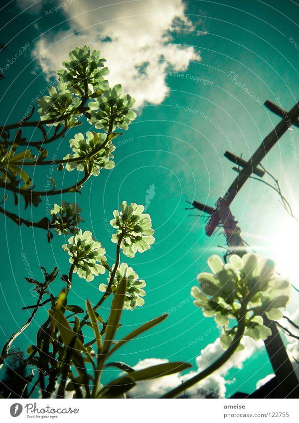 Abends im Garten [pt. 2] Natur schön Himmel Sonne Blume Sommer Haus Wolken Farbe kalt Erholung Blüte Holz Sehnsucht türkis