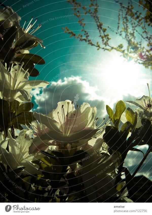 Abends im Garten [pt. 1] Natur schön Himmel Sonne Blume Sommer Haus Wolken Farbe kalt Erholung Blüte Sehnsucht türkis Lichtspiel Feierabend
