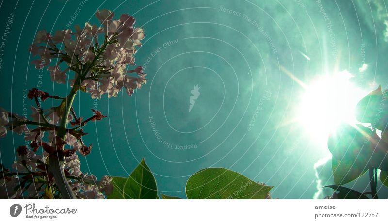 Abends im Garten [pt. 4] Natur schön Himmel Sonne Blume Sommer Haus Wolken Farbe kalt Erholung Blüte Sehnsucht türkis Lichtspiel Feierabend