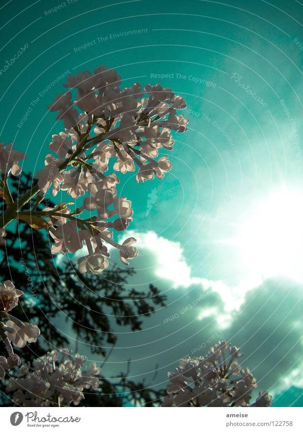 Abends im Garten [pt. 3] Natur schön Himmel Sonne Blume Sommer Haus Wolken Farbe kalt Erholung Blüte Sehnsucht Tanne türkis Lichtspiel