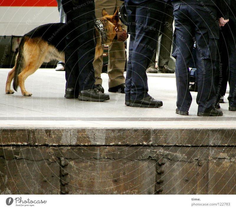 Distanzwaffe (Modell Rex) grün blau Haare & Frisuren Mauer Fuß Beine Eisenbahn Sicherheit Ordnung Macht mehrere Schutz Fell Fliesen u. Kacheln Bahnhof Polizist