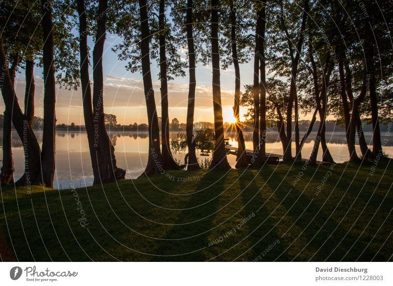 Zwischen den Bäumen Ferien & Urlaub & Reisen Sommerurlaub Natur Himmel Wolken Frühling Herbst Schönes Wetter Pflanze Baum Küste Seeufer Flussufer blau gelb