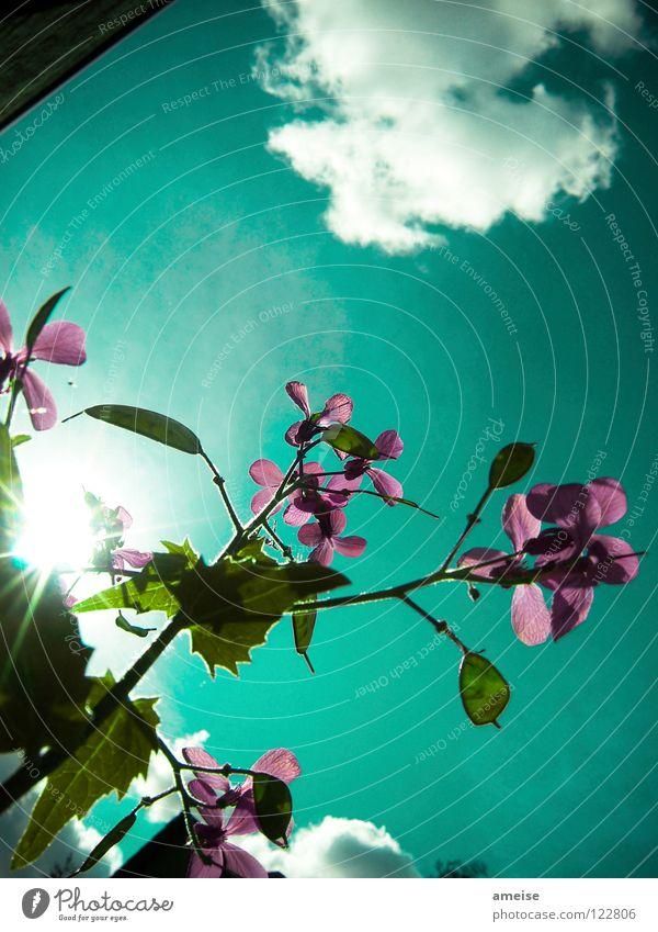 Abends im Garten [pt. 5] Blume Blüte Wolken Sonne Sonnenstrahlen Sommer dunkel schlechtes Wetter türkis Außenaufnahme Landschaft Baum Garage Wand Nachmittag