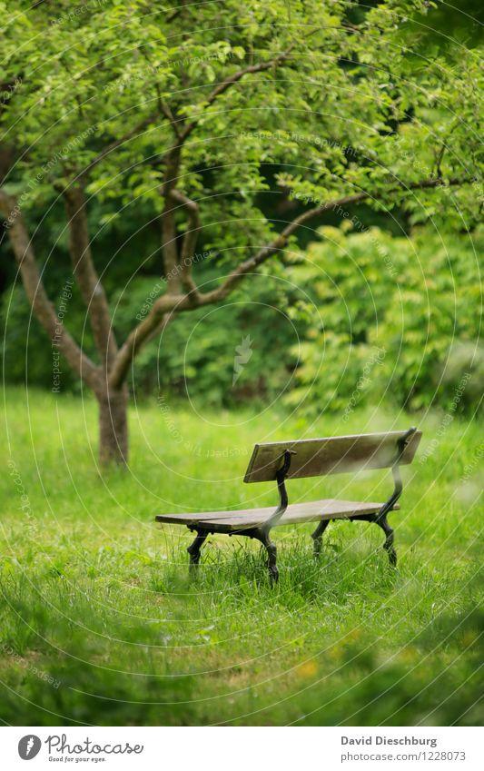 Ruheplatz Erholung ruhig Meditation Freizeit & Hobby Ferien & Urlaub & Reisen Natur Pflanze Tier Frühling Sommer Baum Gras Grünpflanze Garten Park Wiese