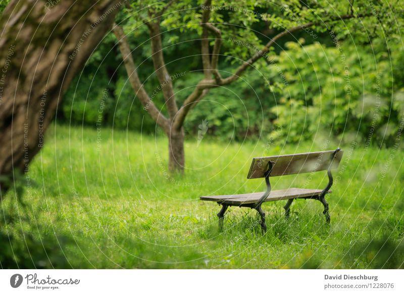 Ruheplatz II Erholung ruhig Meditation Duft Freizeit & Hobby Ferien & Urlaub & Reisen Natur Pflanze Tier Frühling Sommer Schönes Wetter Baum Gras Garten Park
