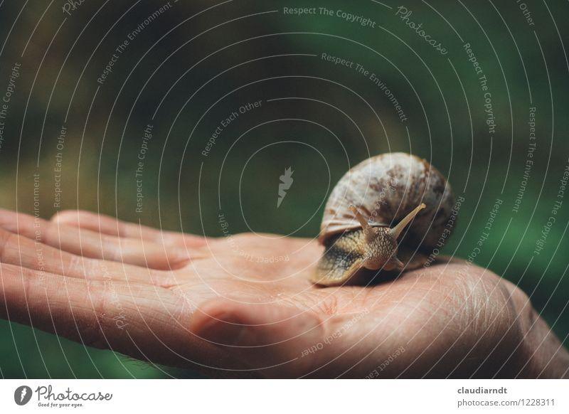 Handschmeichler Mensch Natur Tier Umwelt Bewegung maskulin Wildtier festhalten Umweltschutz krabbeln Schnecke Umweltverschmutzung Ekel langsam schleimig