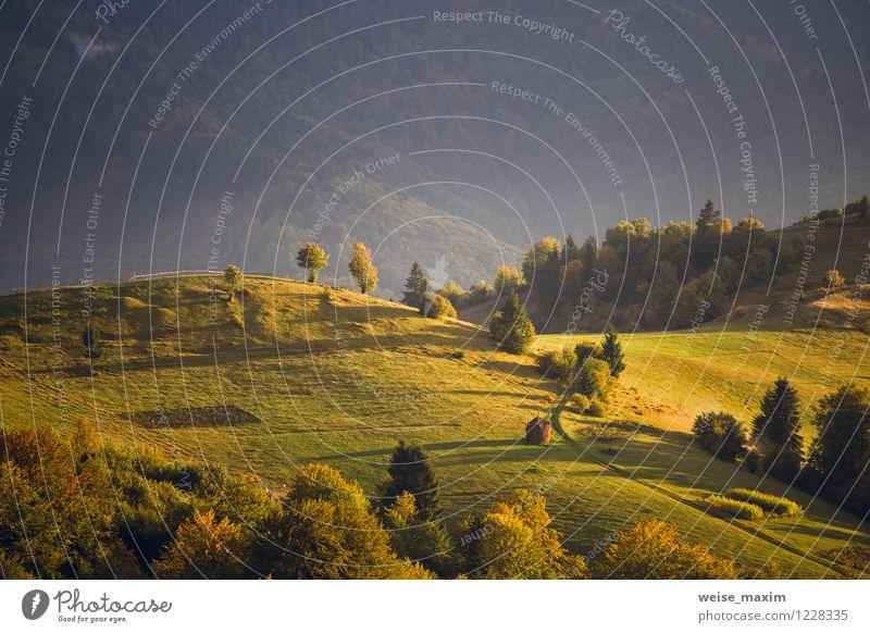 September-Licht Natur Landschaft Luft Sonne Sonnenaufgang Sonnenuntergang Sonnenlicht Herbst Baum Gras Sträucher Moos Wiese Feld Wald Hügel Berge u. Gebirge