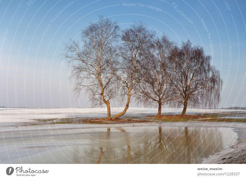 Vorfrühling bei Minsk Umwelt Natur Landschaft Urelemente Erde Sand Luft Wasser Himmel Wolkenloser Himmel Sonnenlicht Frühling Klima Wetter Schönes Wetter Eis