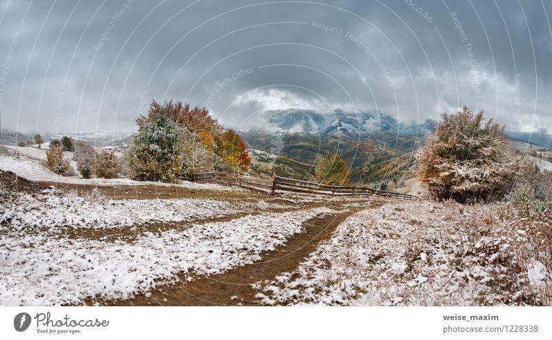 Oktober Schnee Umwelt Natur Landschaft Pflanze Luft Wassertropfen Himmel Wolken Gewitterwolken Herbst Klima Unwetter Wind Sturm Eis Frost Schneefall Baum Gras