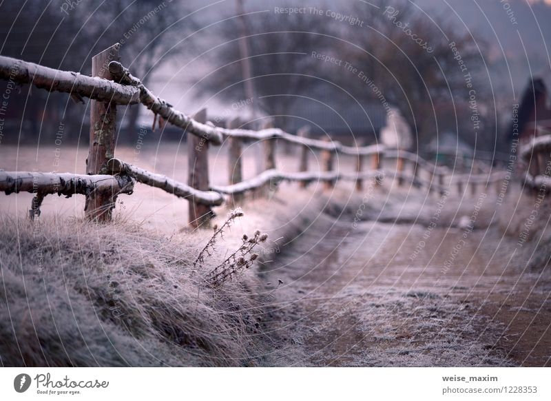 Karpaten im Detail Natur Landschaft Erde Sand Luft Wasser Herbst Klima Wetter Eis Frost Pflanze Baum Gras Sträucher Blatt Garten Wiese Feld Hügel